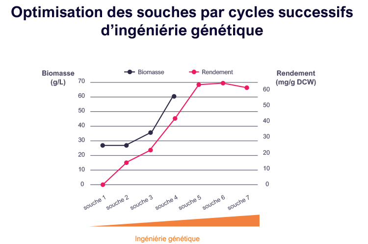 Optimisation de la production du phytoène